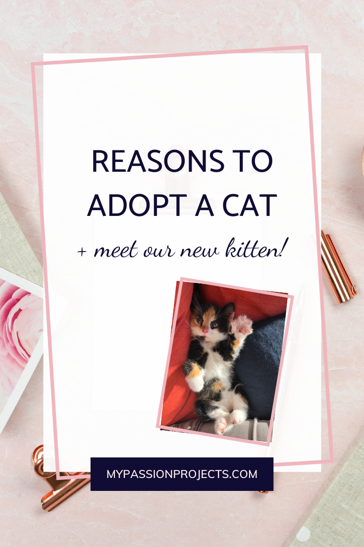 Reasons To Adopt A Cat