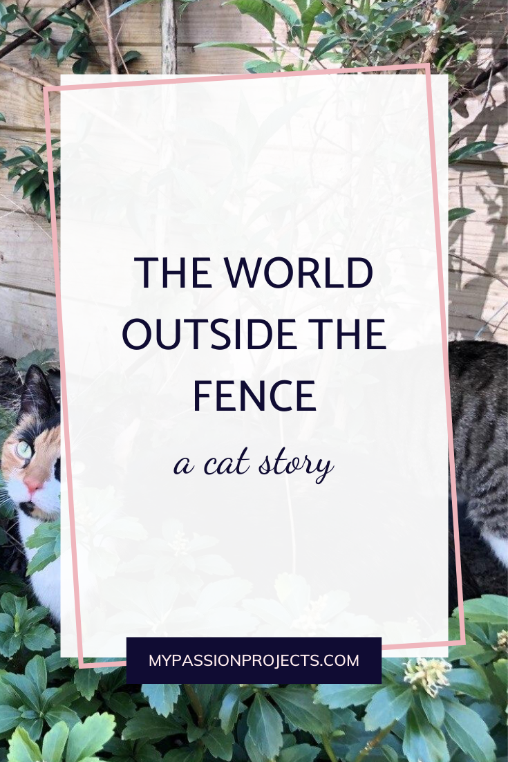 The World Outside The Fence - a cat story